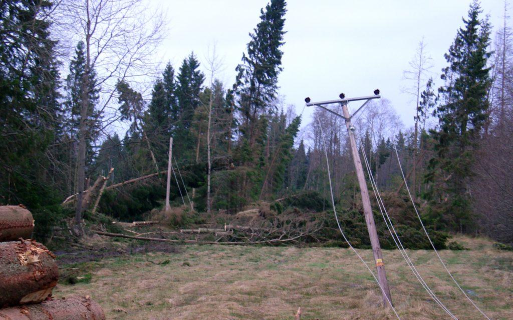 Bild på träd som har blåst ner och elledningar som har fallit