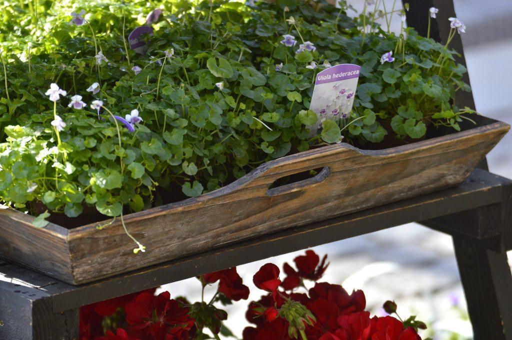 Torghandel med växter