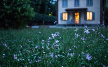Gräsmatta med lila blommor. Hus i bakgrunden.
