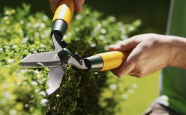 Bild på ett par händer som klipper en buske med häcksax.
