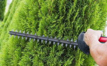 En närbild på en häcksax som klipper en häck